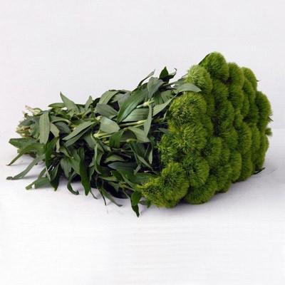 ALDO GREEN SUPER